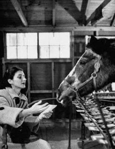 Lady+Wonder+the+Mindreading+Horse